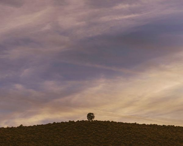Sky Cloud - Sky Field Silhouette Landscape Nature Agriculture Tranquility Sunset Tranquil Scene Beauty In Nature Outdoors One Person Scenics Day Tree Animal Themes People Lone Tree Copy Space Minimalism