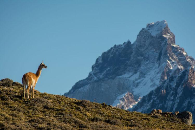 Horse on mountain against clear sky