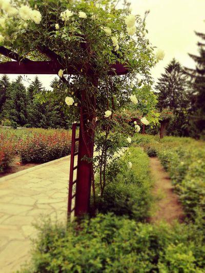 Nature Rose Garden City Park Beautiful Garden