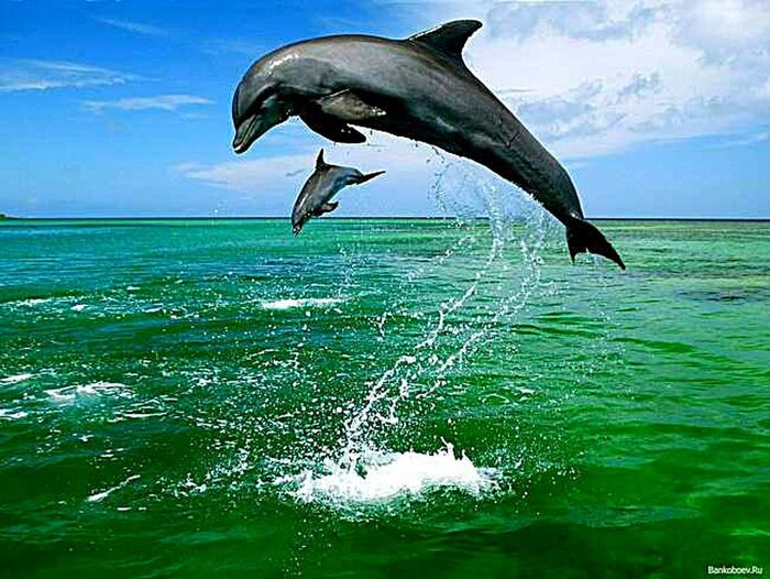 Sea Sea Life Jumping Mammal Animal Wildlife Animals In The Wild Animal One Animal Dolphin Water Animal Themes No People Outdoors Social Issues Cloud - Sky Motion Full Length Blue Day Nature
