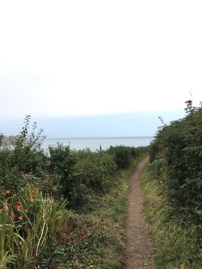 Horizon Over Water Sea The Way Forward Tranquil Scene Tranquility Nature Beauty In Nature Cornwall Walks Cornwall Beauty In Nature Coastline Path Pathway Path In Nature