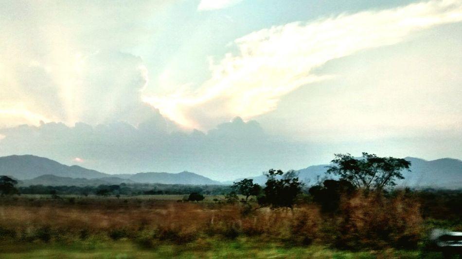 Sky Wings Beautiful Nature