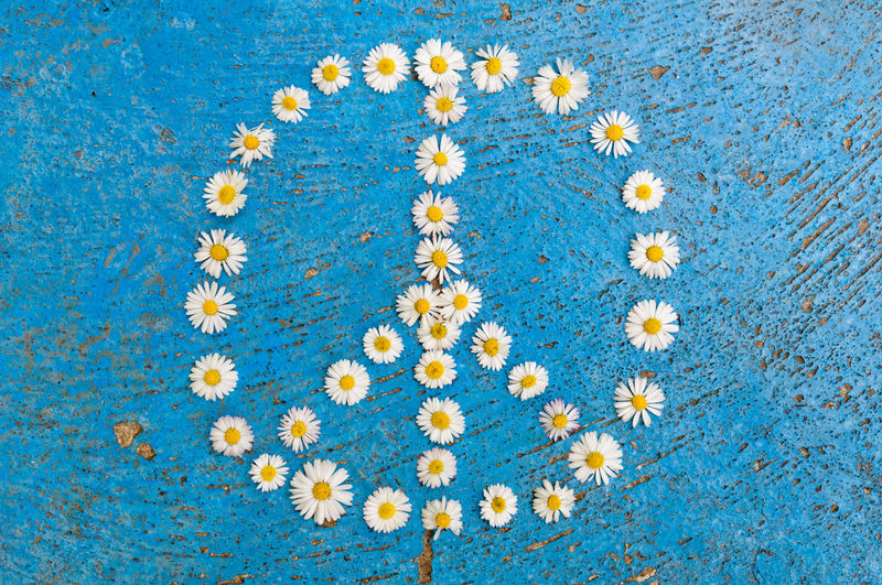 Peace sign, peace symbol, peace design created of daisy flowers on textured blue background Antiwar Background Blue Concept Daisy Flower Design Free Love Pacifist Peace Peace Sign  Peace Symbol Sign Symbol White
