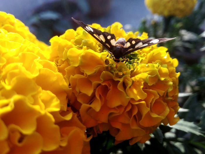 One of my fav. AAA Aleksandr Sereda SmallFlowers Beautiful Natural Beauty Flowers Nature Ownphotography Sweet EyeEm Best Shots EyeEm Gallery EyeEm First Eyeem Photo Learn & Shoot: Balancing Elements