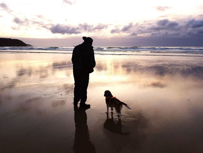 Dog and owner on Cornish Beach in the UK Perranporth British Beaches Perranporth, UK Dogs Shadow Beach Cornwall Cornish Sunset Cornwall Uk United Kingdom England Travel Sea Tide Out Pet Pets Cloudy Sunset Water Sea Full Length Beach Sunset Men Standing Child Silhouette Boys