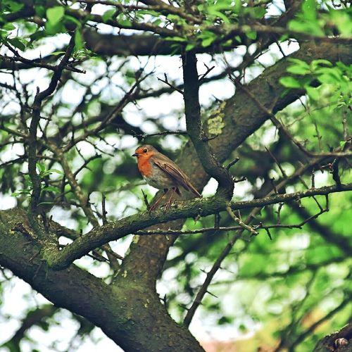 Bird Perching Tree Branch Full Length Animal Themes