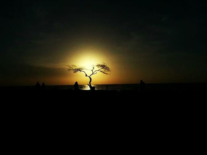 Silhouette Sunset Outdoors World Connection Check This Out The Great Outdoors - 2016 EyeEm Awards Seashores Beach Sunset Beach View Beachside Beach Photography Trees And Sky Bytheocean Bahrain Bahrain Tourism Bahrain Manama Bahrain Travel Paint The Town Yellow Shades Of Winter