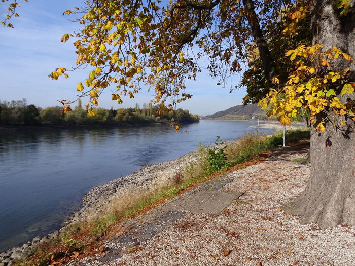 Tree Plant Water Tranquility Beauty In Nature Tranquil Scene Nature Scenics - Nature Growth Sky No People Day Change Autumn Outdoors Non-urban Scene Landscape Autumn Rhine Rhine River Insel Grafenwerth