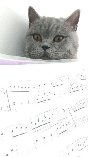 Britishshorthair Mycats Animal Musicandlove Eyes Cat Myplaceintheword Catandbook Sunday Morning Moments Of My Life Cateyes