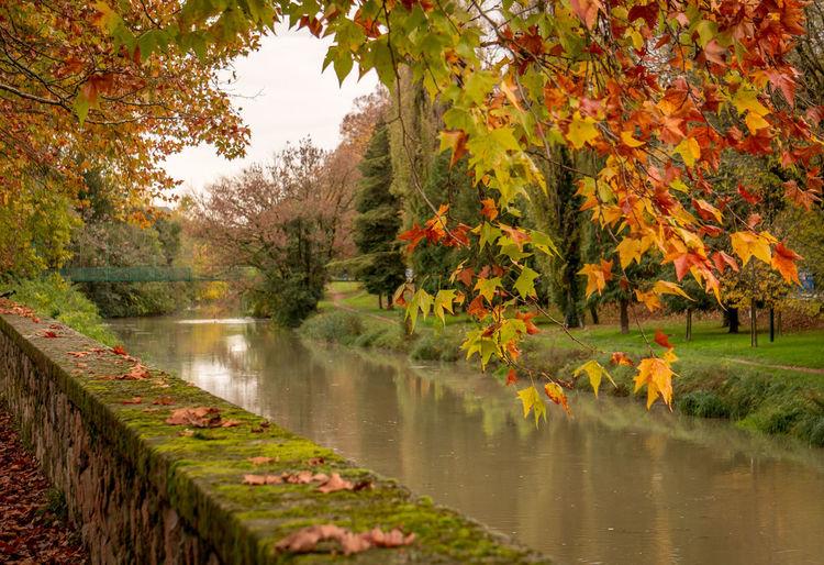 Autumn in