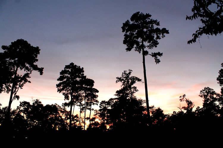 Tree Sunset Silhouette Palm Tree Nature Tree Trunk TranquilityTexas Houston Texas United States Dramatic Sky Perspectives On Nature Dramatic Sky Sky Scenics Beauty In Nature Tranquil Scene Tree Area Cloud - Sky Outdoors No People Forest Growth Landscape Natural Parkland
