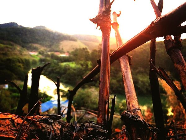 Looking Focus On Foreground Back Lit Sun Close-up Safety Wood - Material Mountain Fence Rural Scene Scenics Tranquility Nature Plant Non-urban Scene Tranquil Scene Outdoors Growth Sky Beauty In Nature Agriculture Farm Non Urban Scene