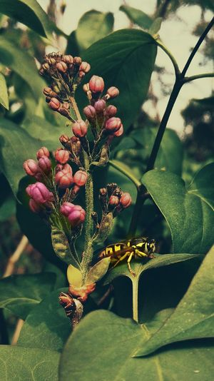 Flower Nature Plant Growth Beauty In Nature Fragility One Animal Animal Themes Freshness No People Green Color Leaf Close-up Day Animals In The Wild Flower Head Insect Outdoors Wasps🐝 Wasp Lilac
