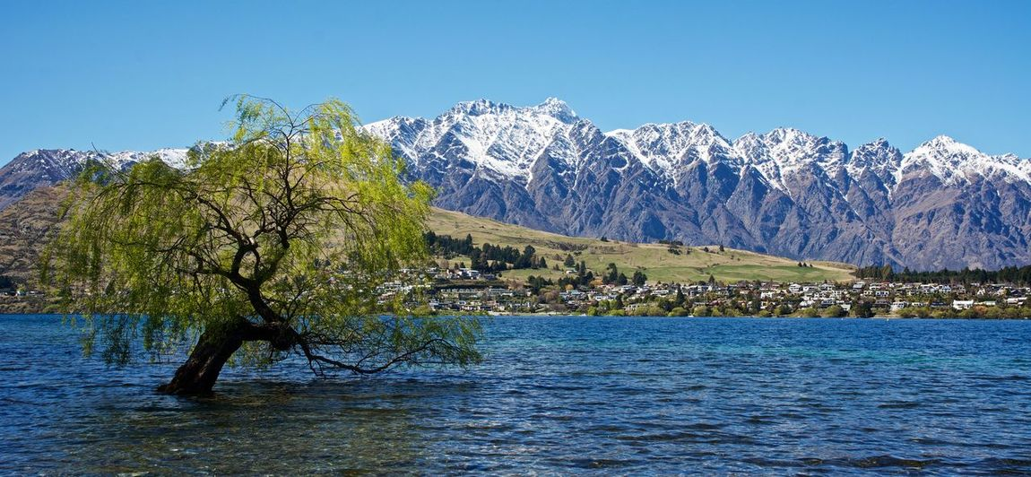 The Queenstown Tree Lake Wakatipu, NZ NZ NZ South Island Queenstown Nz The Remarkables Tranquility Beauty In Nature Blue Day Lake Landscape Mountain Mountain Range Nature No People Outdoors Scenics Sky Snow Tree Water