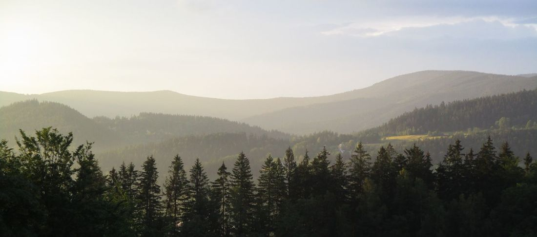 Beauty In Nature Cloud - Sky Coniferous Tree Day Environment Forest Growth Idyllic Land Landscape Mountain Mountain Range Nature No People Non-urban Scene Outdoors Plant Scenics - Nature Sky Tranquil Scene Tranquility Tree