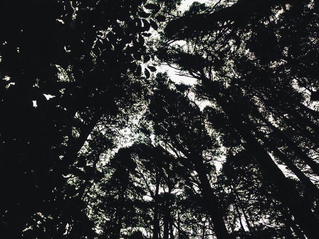 Trees Look Up Bosque De La Hoja Shadows Tall Sky Light Beauty Nature Pretty Leave Road Trip Costa Rica