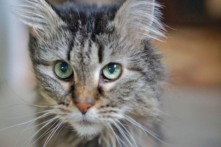 Kitty Cat EyeEm