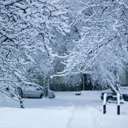 Домашняя тропинка. Snow ❄ Trees Siberia