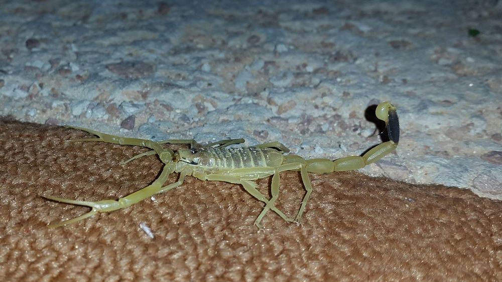 Hi! Hello World Samsung Galaxy S5 Welcome To My World Enjoying Life EyeMe Scorpions