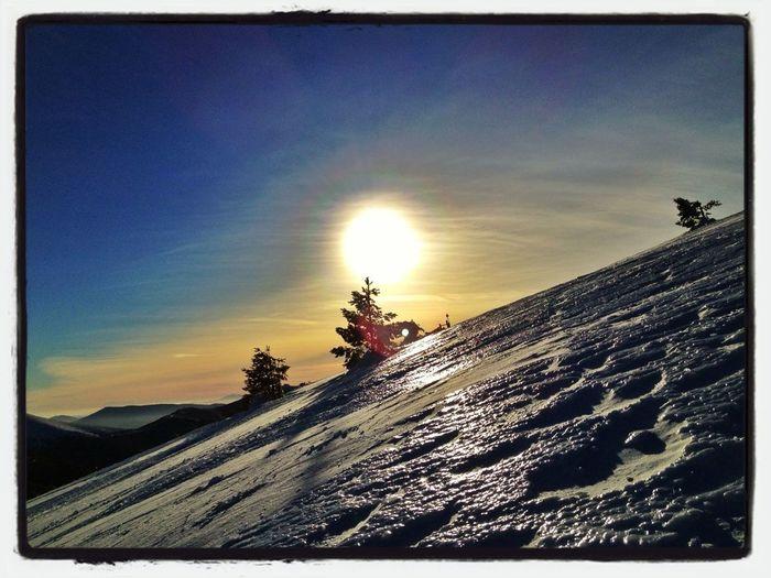 Sun & Tree #esquídemontaña #skimountaineering #peñalara #guadarrama #mountain #up #sunset #atardecer #training #afterwork #snow #ice