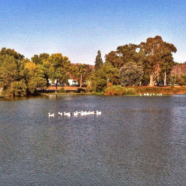 Getting my ducks in a row! EyeEm Nature Lover Nature Wildlife Walking Around