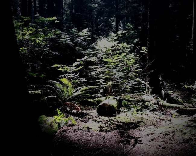 Trail Moment