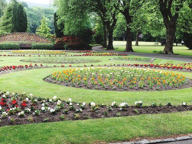 Christie Park in full bloom ❤️😊🐞🐝🌹🌷🌼🌸🌺🌻