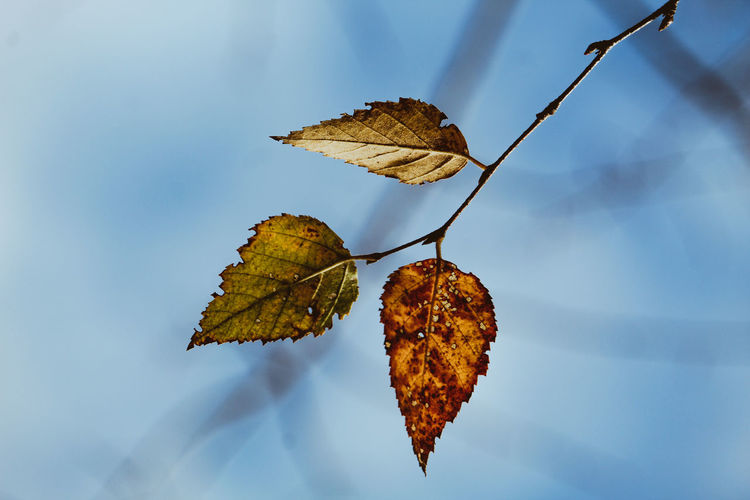 Close-up of dried leaf on branch against blurred background