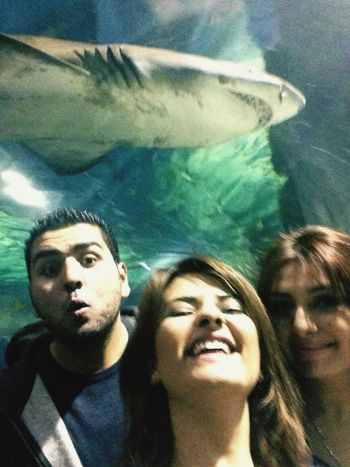 Aquarium Selfie With Sharks Forumistanbul Istanbul Turkey Having Fun Vacation