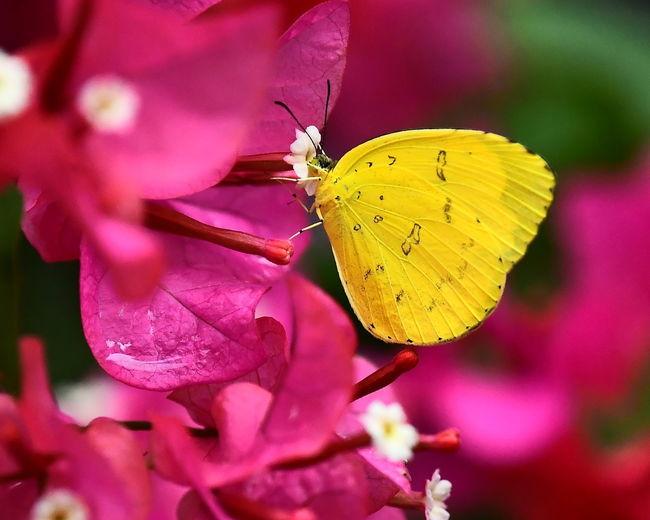 Flower Perching