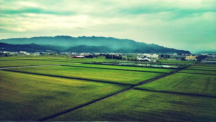 Taiwanscape Landscape Filippa K Asks: What Inspires You? Green Green Green!  從高鐵看台灣