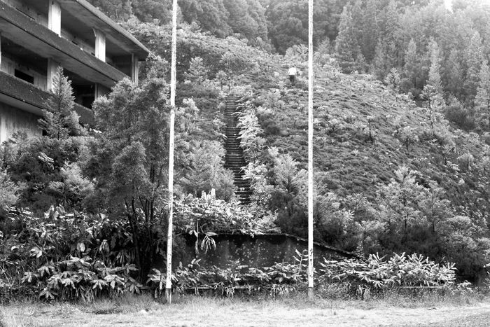 Architecture Azores Azores, S. Miguel Blackandwhite Built Structure Day Grass Green Color Growth Landscape Lines Nature No People Oldhotel Outdoors Plant Portugal Tranquility Tree Tree Trunk First Eyeem Photo