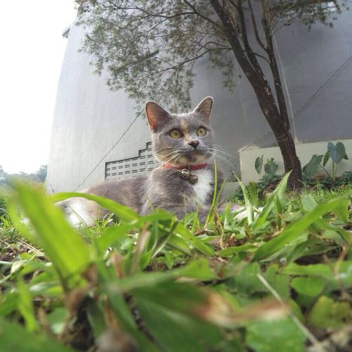 Sonyarita 💚 Cat Kitten Kitty Kittens Catworld View Enjoying The View Cats Cat♡ Catsofinstagram