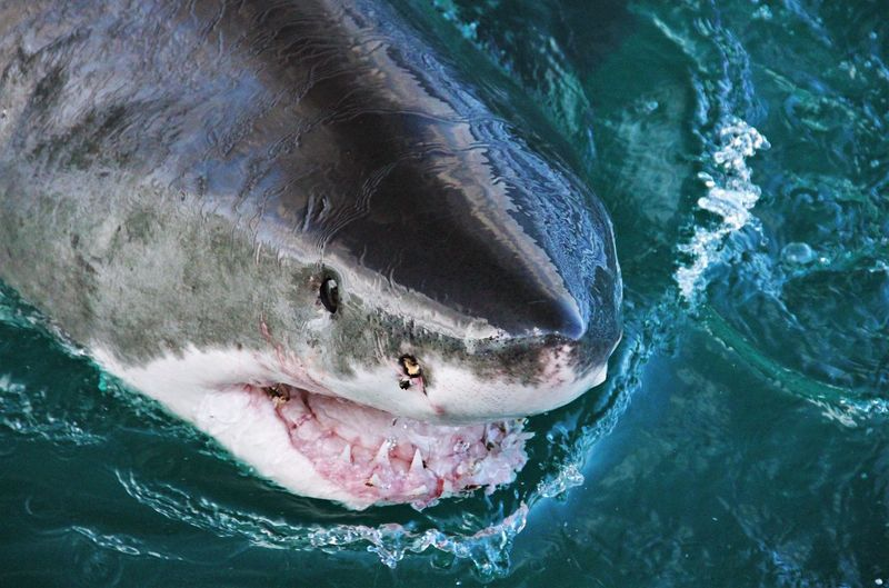 Close-up of shark in water