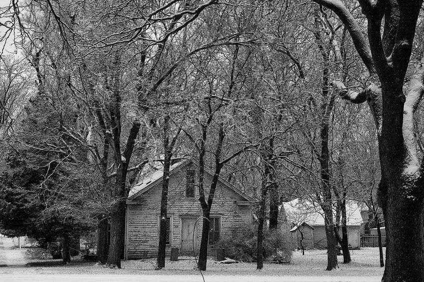 Snow Day - Western, Nebraska November 29, 2015 A Day In The Life Bare Tree Cold Cold Temperature Color Photography Fujifilm_xseries Helios 44-2 Making Pictures My Neighborhood No People Outdoors Season  Showcase: November Small Town USA Snow Snowday Tree Weather Webupload Winter