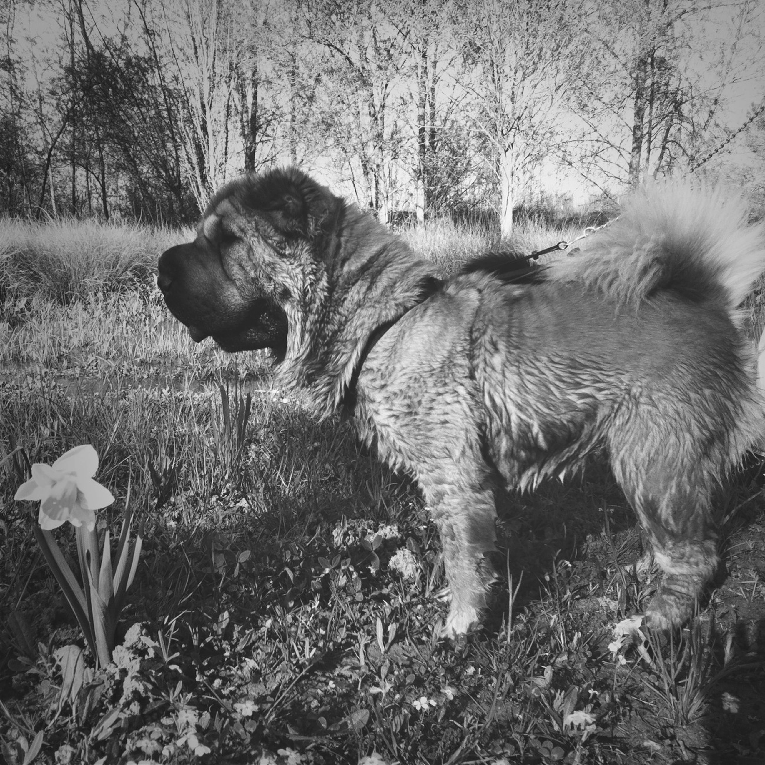 animal themes, one animal, mammal, grass, field, domestic animals, nature, tree, wildlife, animals in the wild, outdoors, dog, day, no people, relaxation, plant, forest, side view, growth, standing