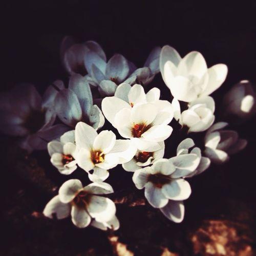 It's Spring ☀️💐🐣 Taking Photos FreierTag Frühling Enjoying Life Frühlingsblümchen Frühlingsgrüße Spring