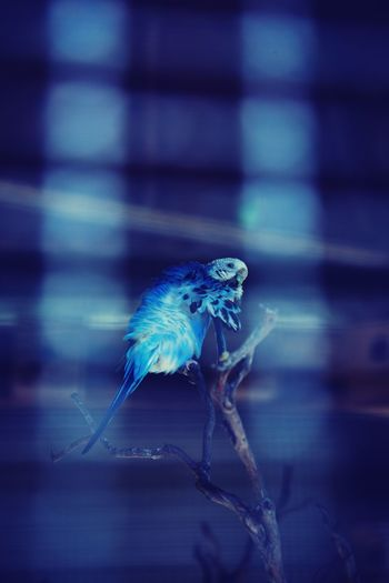 Neon Life Bird