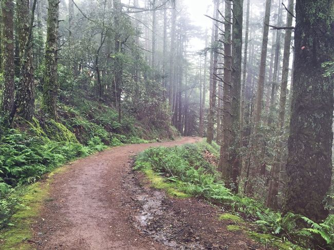 Let's get lost amongst the trees Forest Forestwalk Trees Nature Nature_collection Hiking Mist Fog