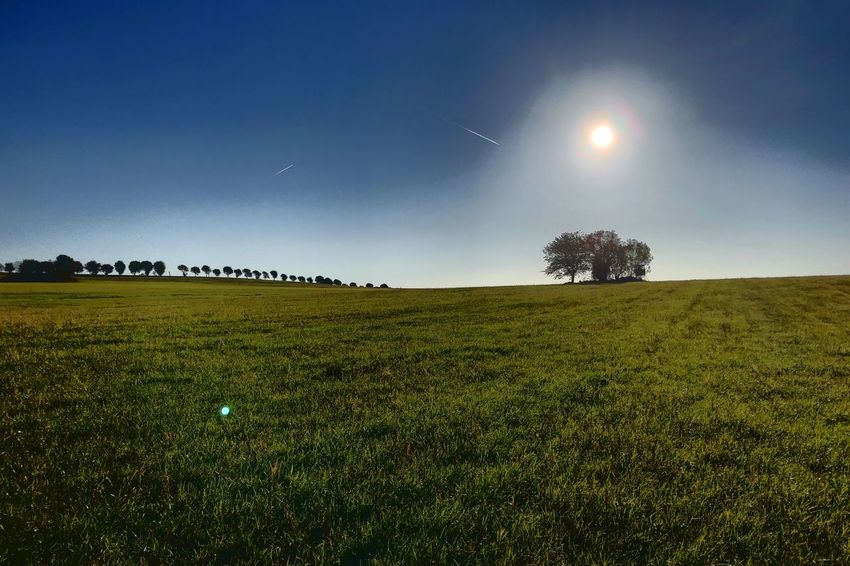 """""""Goldener Oktober"""" Condensation Trail Kondensstreifen Sun Sonne Golden October Goldener Oktober Day Sky Plant Land Landscape Field Environment Beauty In Nature Tree No People Outdoors Grass Nature"""