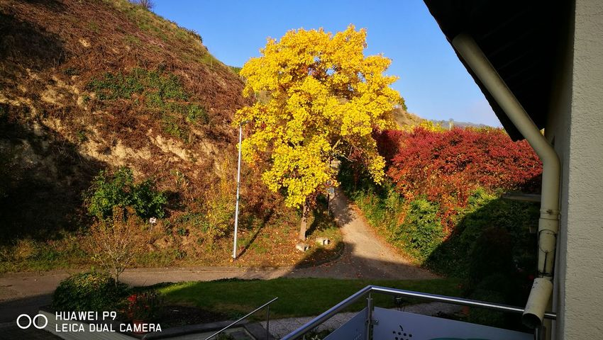 EyeEmNewHere Yellow Tree Nature Outdoors Beauty In Nature