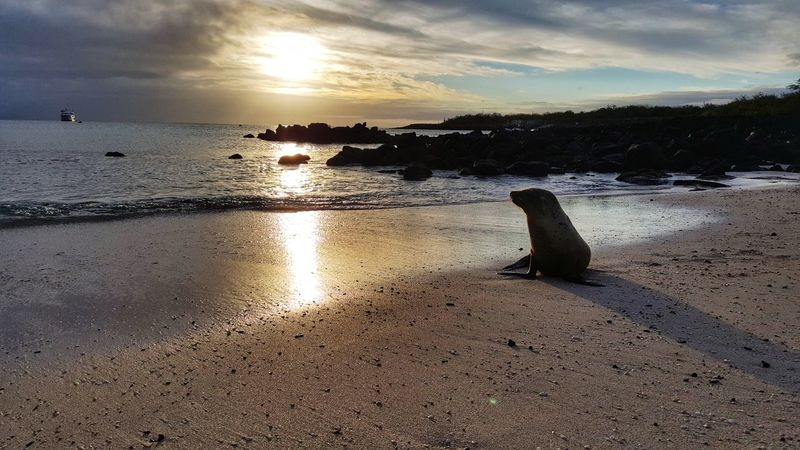 Sunset Sea Beach Cloud - Sky Reflection Water No People Nature Sky Outdoors Sand Horizon Over Water Beauty In Nature Swimming Day Animal Themes UnderSea Sea Lion Natural Habitat