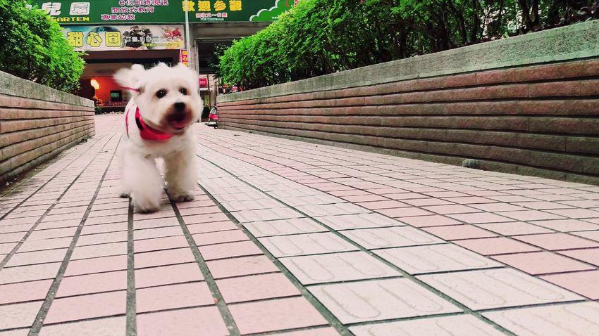 繼薇 Chi-wei Smile Taking Photos Relaxing Enjoying Life Summer ☀ She Is My Sister Dog Animal Photography Walking Around 簡單的笑容\(^o^)/ Need For Speed