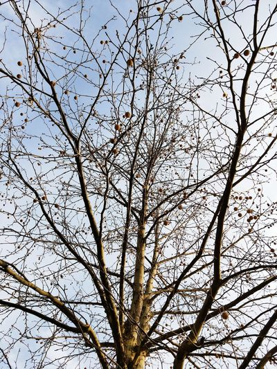 Low Angle View Branch Backgrounds Tree Nature Full Frame Day