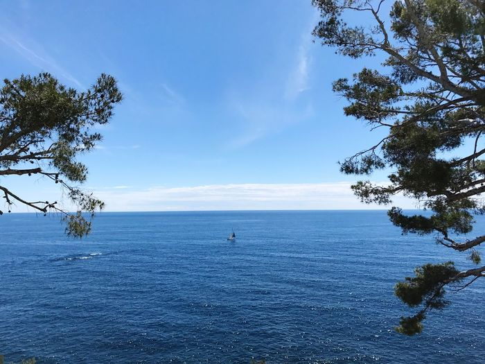 Sea Scenics Nature Beauty In Nature Water Sky Tranquility Tranquil Scene Horizon Over Water Blue Tree Day Outdoors Real People One Person People French Riviera Mediterranean