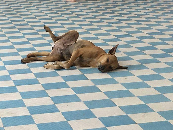 Dog sleeping on tiled floor