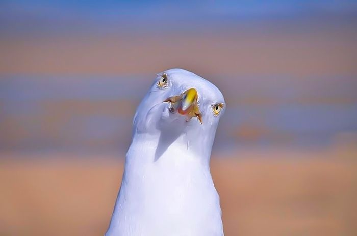 You talking to me ? Seagulls Beach Photography Animals Macroclique