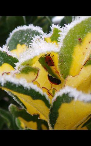 Ladybirds Frost Macro Nature Streamzoofamily