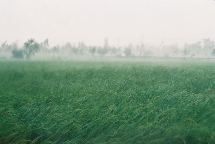 Hard rain and windy storm is coming Beauty In Nature Day Field Fog Foggy Grass Green Color Growth Hard Rain Idyllic Landscape Mist Nature No People Non-urban Scene Outdoors Plant Rural Scene Scenics Sky Storm Tranquil Scene Tree Weather Windy