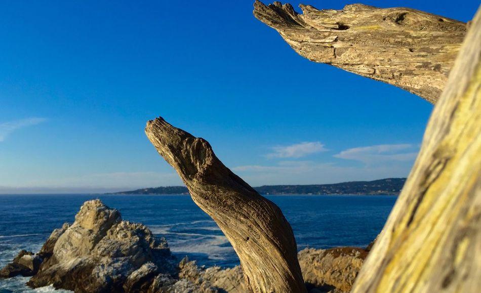 California Water Sky Sea One Animal Nature Day Rock First Eyeem Photo
